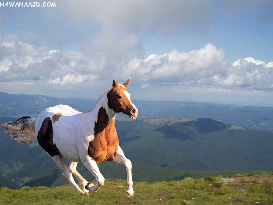 Mind blowing free wallpapers of horses world 39 s top - Free horse backgrounds ...