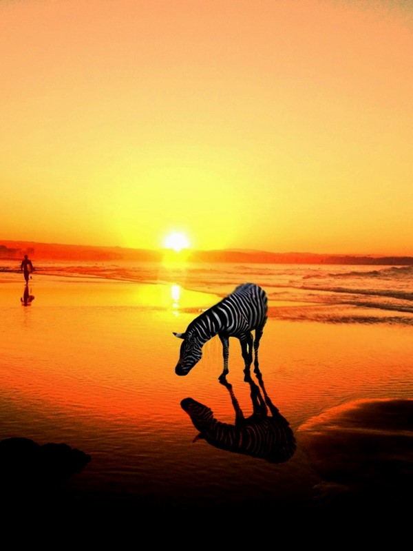 Orange Zebra by Leisa Doherty took the Beach Life category.